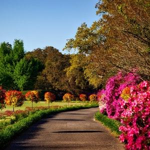 Garden Decor at Fi Interiors